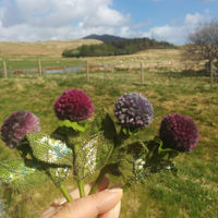 Skye Thistle brooches